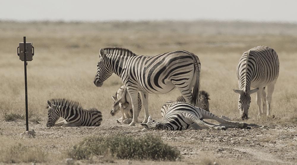 Animals Ecology Behavior
